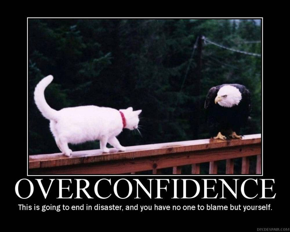 Domestic cat approaching massive eagle, captioned: OVERCONFIDENCE. This is going to end in disaster, and you have no one to blame but yourself.
