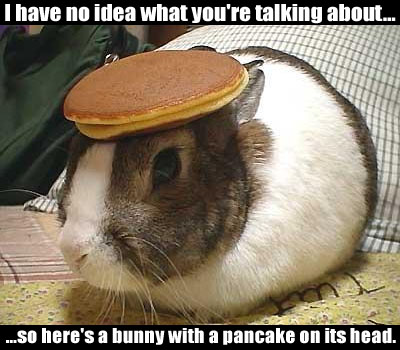 I have no idea what you're talking about. So here's a bunny with a pancake on its head.
